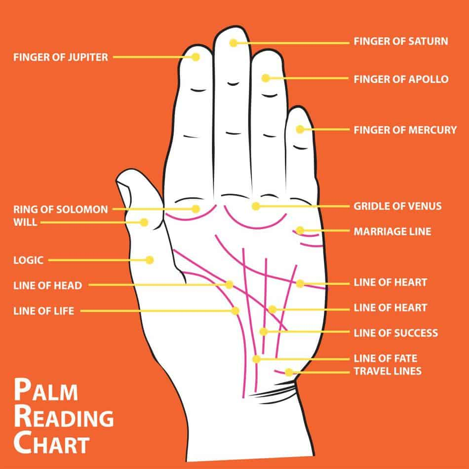 You can learn about the palms