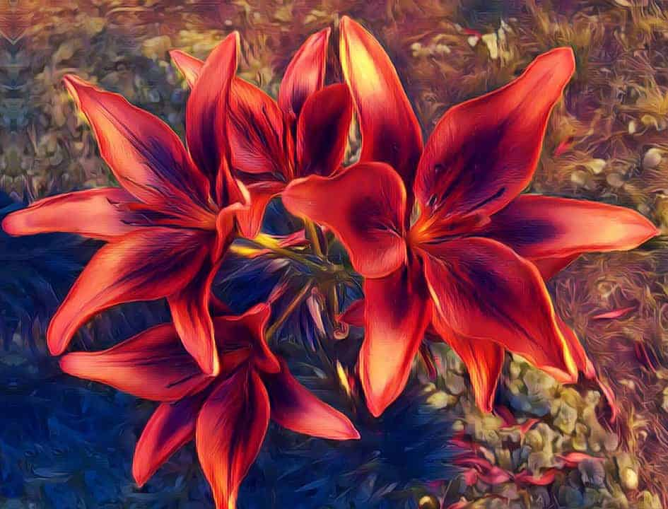 Lily Flower looks incredible