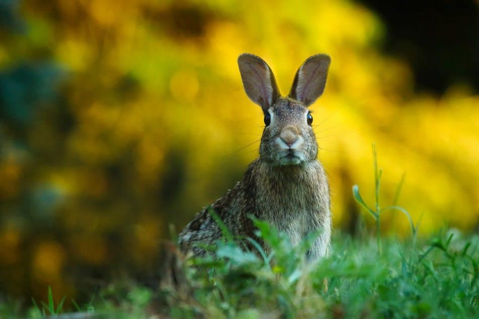 Year of the Rabbit Meaning for finances