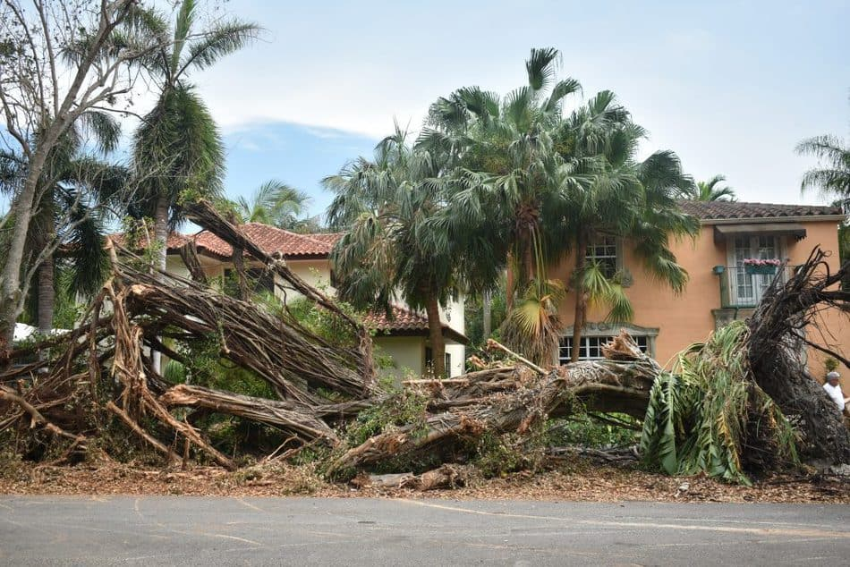 banyan trees destroyed in miami