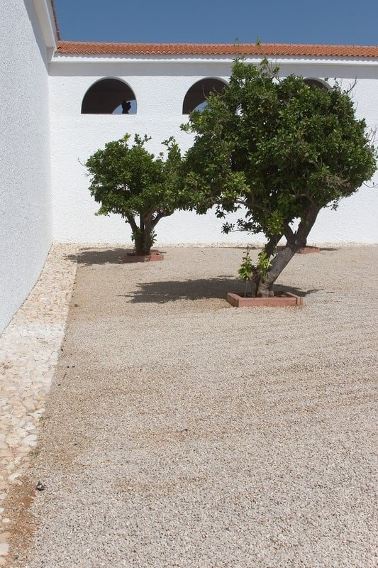 terrace garden trees to look forward to