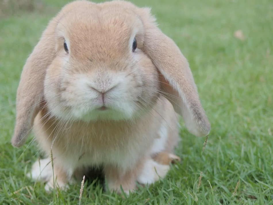 get information about rabbits