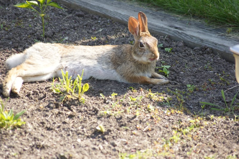 bunny food for beginners