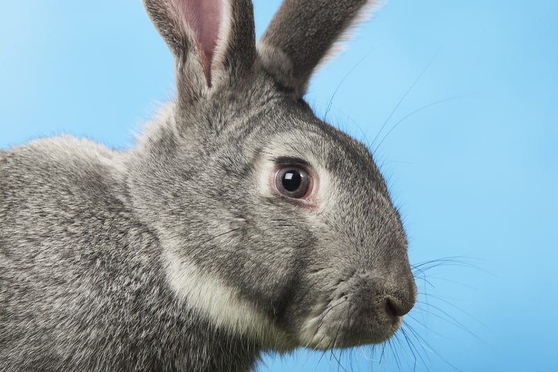 care for rabbits properly