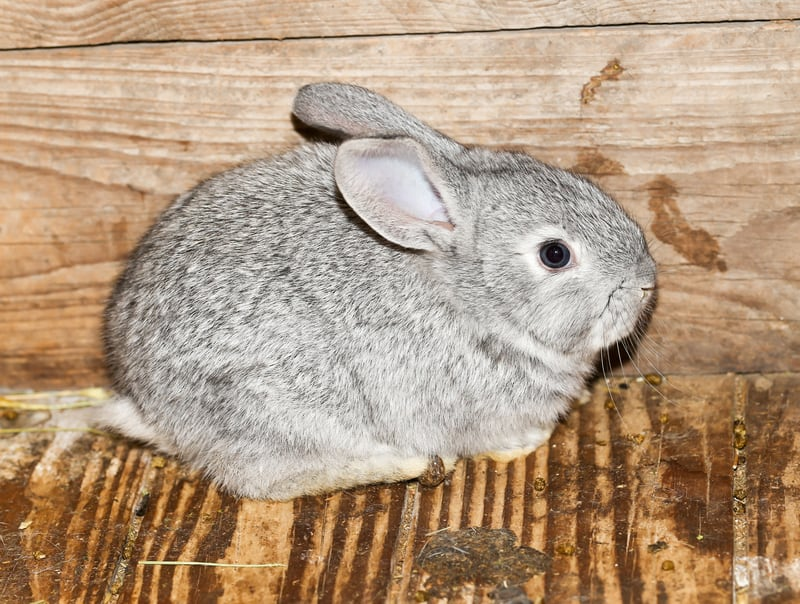 caring and loving a rabbit well