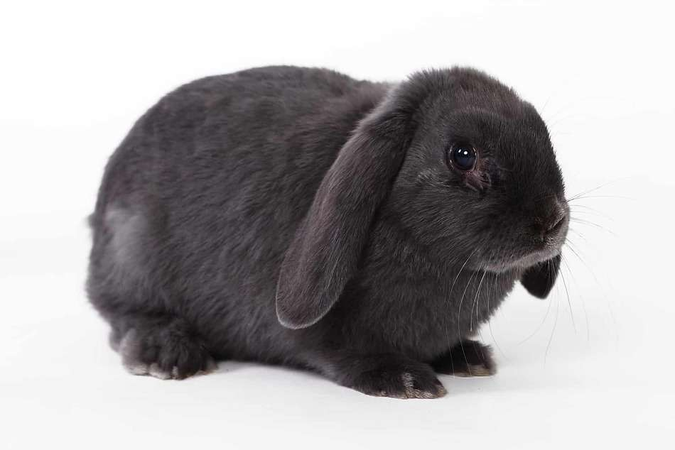 learn about rabbit cages