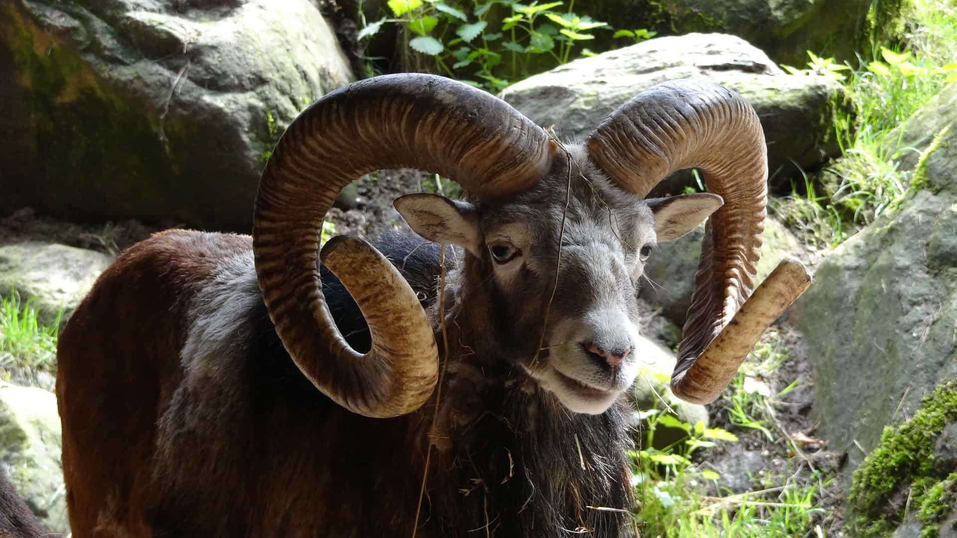 Aries and Cancer Compatibility with wanting love and companionship