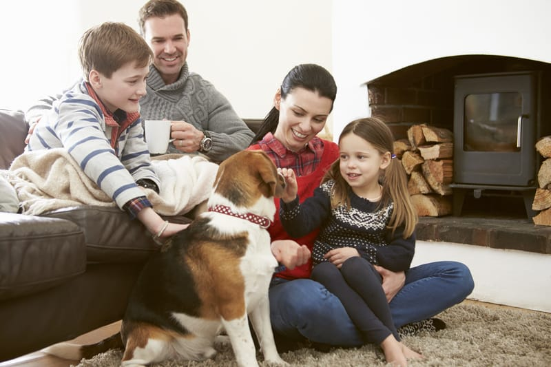 Dogs and family love