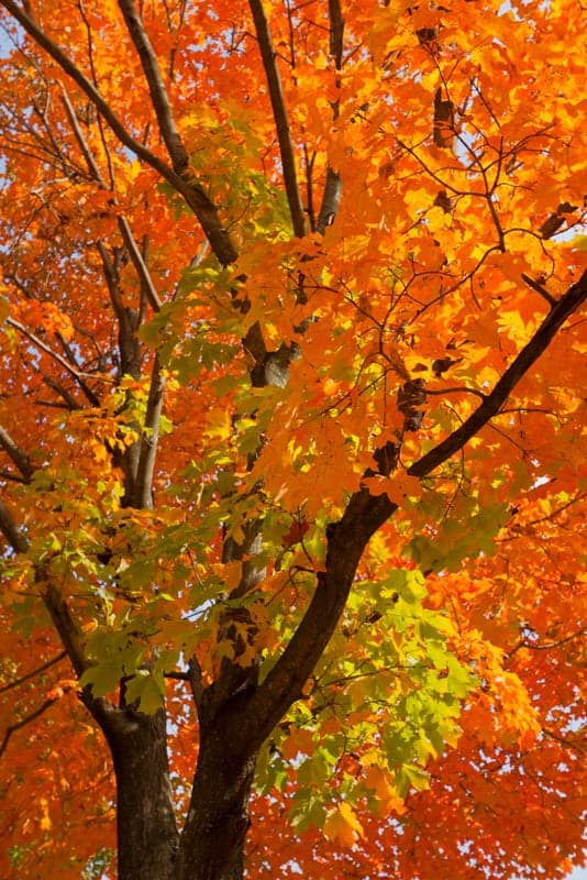learn more about autumn trees