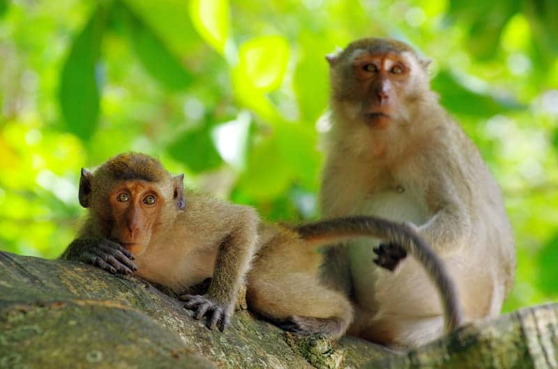 Learn more about monkey signs