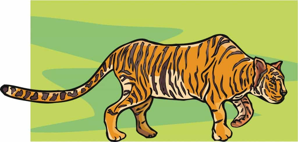 Learn about tiger signs